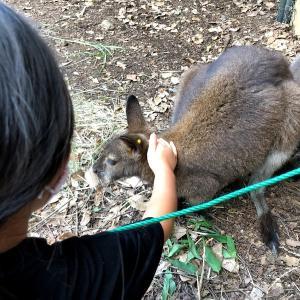 【お出かけスポット】【埼玉】【東松山】埼玉県こども動物自然公園に行ってきました 続き×3