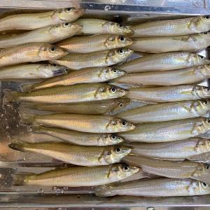 地方移住、釣った魚を夕飯に!