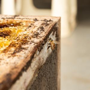 採れたてのハチミツ!