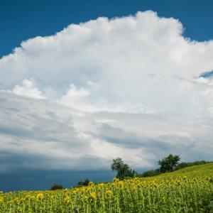 またまたかなとこ雲発見!