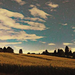 向日葵と星空の写真を撮った!