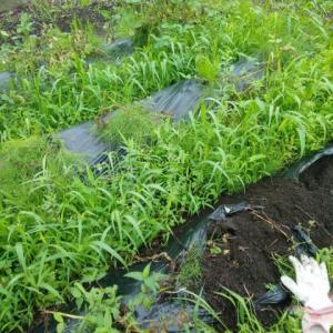 ジャガイモの収穫② とニンジンの様子見。梅雨時は大変!