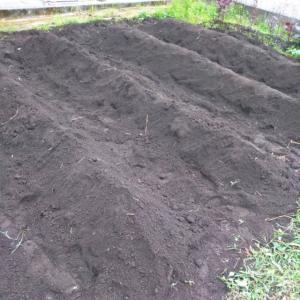 【畑】ジャガイモを植えました