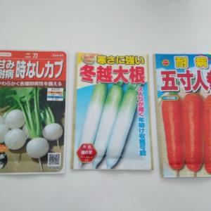 【畑】根菜の種をまきました
