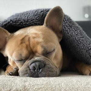 休日の「寝だめ」は脳と体のSOS信号?「睡眠負債」に注意!!