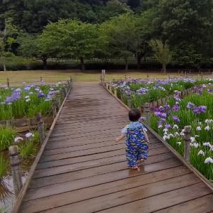 菖蒲園こと北山公園