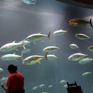葛西臨海公園・水族園に子連れで行ってきました