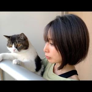 🐈外の景色に夢中な親子猫