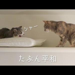 たぶん平和な天井付近の猫達   #モアクリ Vlog058