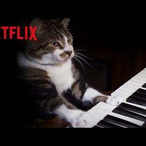 癒し – ピアノを弾く猫がかわいすぎた   キャット・ラブ: ネコに捧げる愛の歌    Netflix Japan