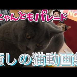 今日の癒される猫ちゃん動画集!No.84【にゃんともパレード】
