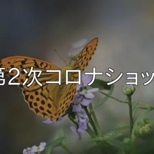第2次コロナショック・暴落の序章~禁酒41日目~