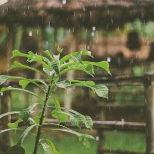 雨のシャワー Friendly Shower 9月は雨の季節