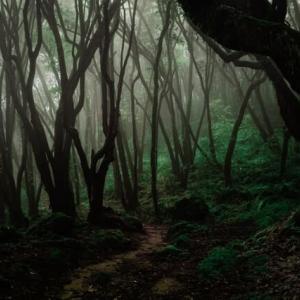 冷たい雨を降らす9月の精霊が語る思い 森は生きている マルシャーク