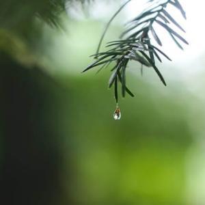 秋霖 September Rain 何事もなく無事で過ごせる幸せ