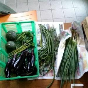 2021年9月16日の畑作業 / 収穫した野菜を食べる