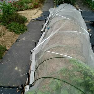 畑の台風対策
