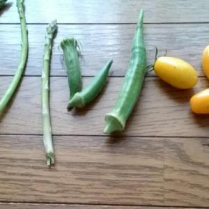 2021年9月19日の畑作業 / 収穫した野菜や祖母の梅干しを食べる