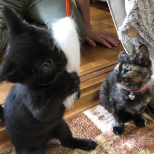 黒猫オレオちゃん♡サビ猫ココアちゃん♡おめでとう✨✨