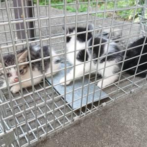 安楽死をお願いされてしまった子猫達の運命