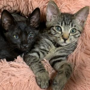 ヤンチャな子猫達ワクチン出来ました。天&光