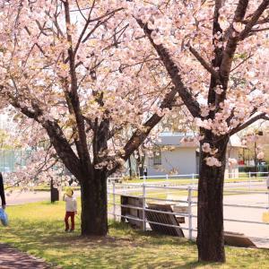 春の公園あそび