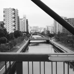木場公園の橋上から