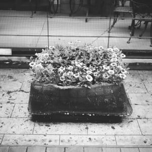 深川ギャザリア 水辺の鉢花