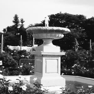 京成バラ園の噴水