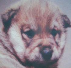 ある日 犬の国から手紙が来て:愛犬をにじの橋へ見送った方におすすめする本