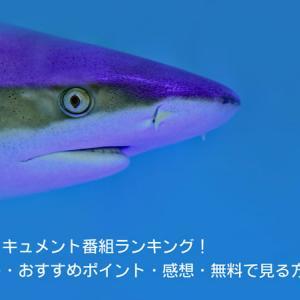 サメのドキュメント番組!あらすじ・おすすめポイント・感想・無料で見る方法は?