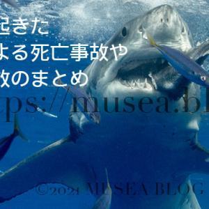 2021年までに日本で起きたサメによる死亡事故や負傷事故のまとめ