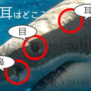 サメの耳はどこ?