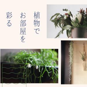 植物でお部屋を彩る