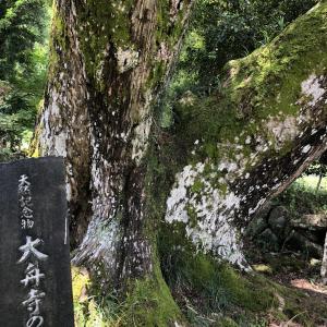 【シリーズ】巨樹・巨木を観る 第4回 兵庫県三田市