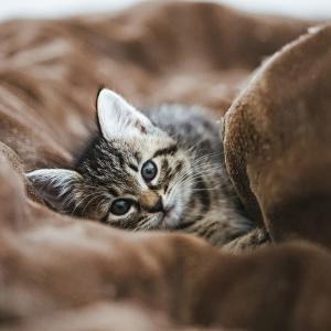 癒やしの猫