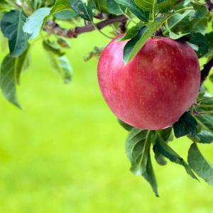 あなたはりんごの木?みかんの木??♡