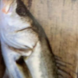 釣れる魚~防波堤~2