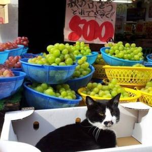 ネコとブドウ