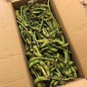 丹波篠山黒大豆枝豆