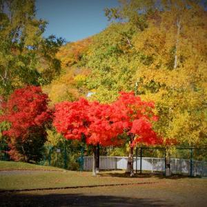 平和渓流公園の紅葉