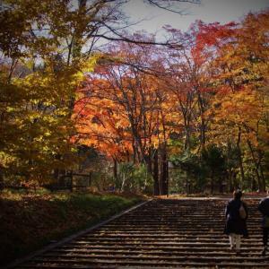 北海道神宮の秋 パートⅠ