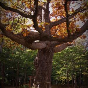 北海道神宮の秋 パートⅡ