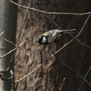 神宮の野鳥たちⅡ