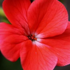 旭山記念公園の植物