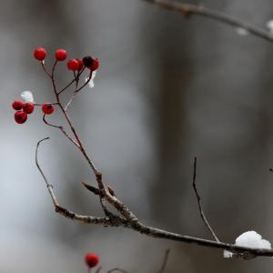 雪と野鳥たち