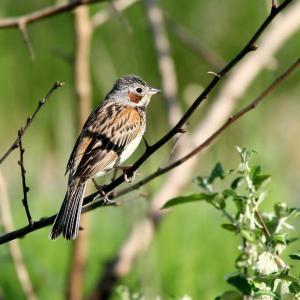 河川敷の野鳥さん達
