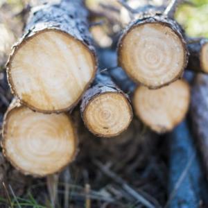 【ハチの巣を作らせない】早朝から木の伐採と草むしり