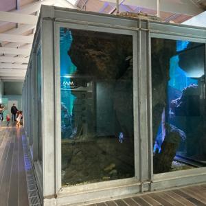 とっっても小さい水族館 en Vigo