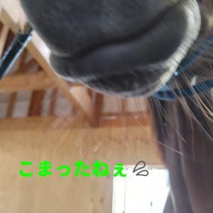 うう……( ・᷄ὢ・᷅ )